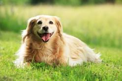 Vortrag: Vermenschlichung des Hundes im Forsthaus Wörnbrunn