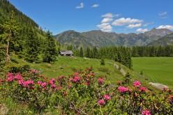 Genusswandern im Tal der Almen – Grossarl Tal im Salzburger Land